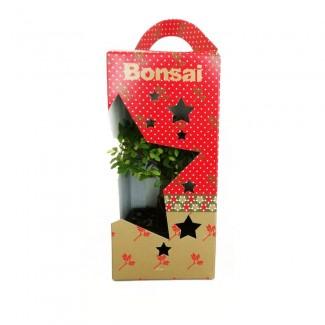 Small Christmas Bonsai
