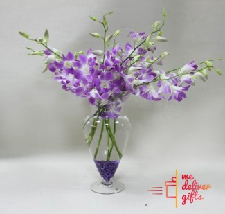 Purple joy Flowers