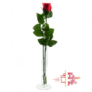 Single Red Rose in a Tube