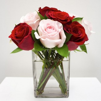 Red and Pink Roses in a Cube