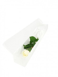 Single Rose in White Box