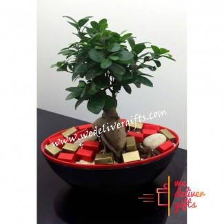 Bonsai Tree decorated with Chocolate