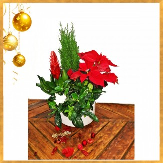 A Greeting Plants Arrangement