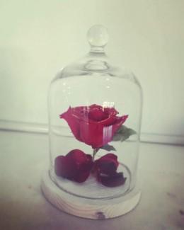 Rose forever