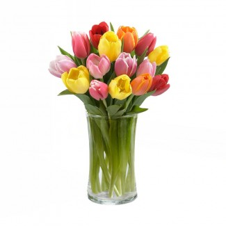 Tulips Multicolored in A Vase